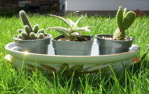 The beginnings of a new cactus garden. Now must learn their names!